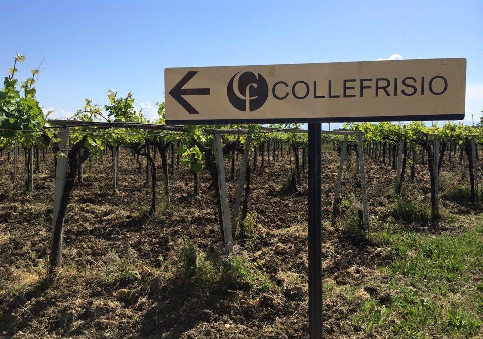 collefrisio vineyard